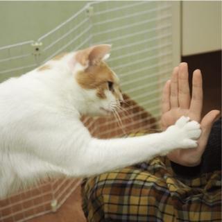 ハイタッチ猫【水無月】