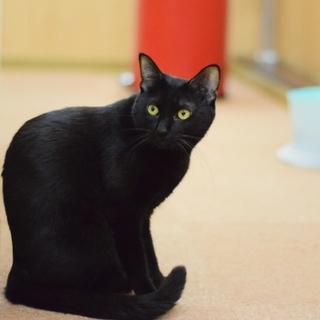 黒猫美猫【くみちゃん】