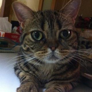 急募!!落ち着いた猫との生活が希望の方!