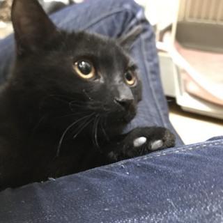 黒猫の可愛い男の子・ユタカ
