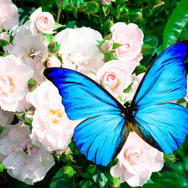 白花タンポポのカバー写真