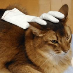 のせ猫にチャレンジしたうちのソマリです