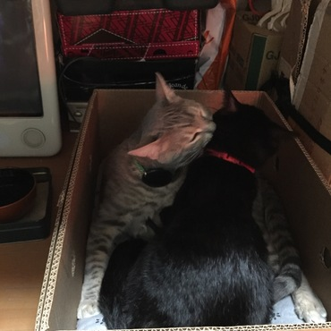 ベンくん子猫を離さない