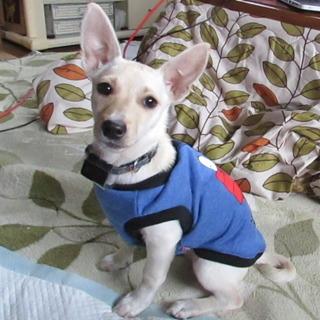 3か月子犬ララちゃん小柄