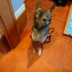 忠犬マルコ