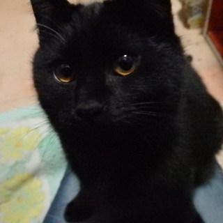 保護した可愛い黒猫さん