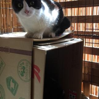「モン」ニートな野良猫の子