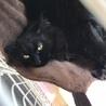 長毛の黒猫☆エイキちゃん サムネイル2