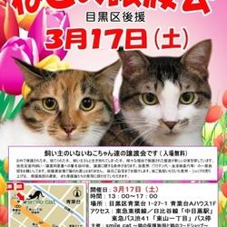 ★3月17日(土)「ねこの譲渡会(目黒区後援)」smile cat@中目黒(室内) サムネイル1