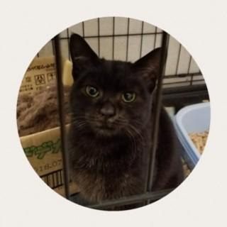 ゴロゴロ(๑•ω•๑)♡黒猫