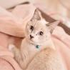 【一時停止】シャム風美猫【ひなこ】