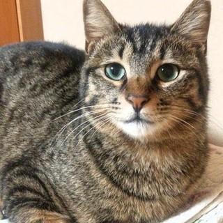 #50きゅーちゃん!子猫みたいな可愛い性格の女の子