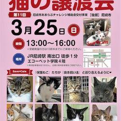第11回 猫の譲渡会