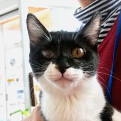 猫の譲渡会 名古屋市守山区