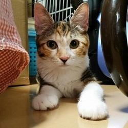 3月16日(金) 地域猫から社会猫へ FIPフリー 四谷猫廼舎 里親会(ボランティア募集中) サムネイル2