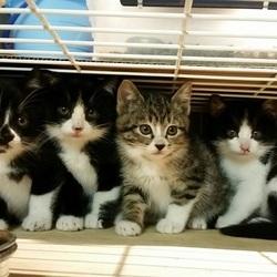 3月16日(金) 地域猫から社会猫へ FIPフリー 四谷猫廼舎 里親会(ボランティア募集中) サムネイル3