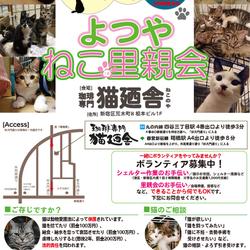 3月24日(土) 地域猫から社会猫へ FIPフリー 四谷猫廼舎 里親会(ボランティア募集中)