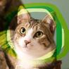 猫初心者向け手術済みキジ白♡キジ猫ヘソ天月影