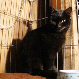 綺麗な黒猫〜雪乃ちゃん☆