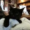 なれなれの黒猫男の子