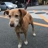 授乳し終わって捨てられたMIX犬の母犬