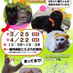 『ワッショイ猫Neko祭り里親会』