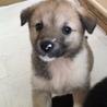 保健所からレスキューした子犬メスA
