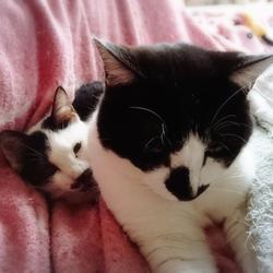 11月18日★川越保健所★猫の譲渡会★30匹
