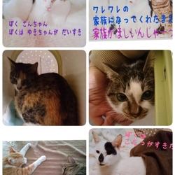 11月10日★川越保健所★犬猫の譲渡会 サムネイル2