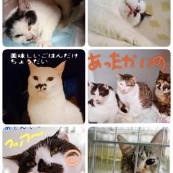 11月10日★川越保健所★犬猫の譲渡会 サムネイル3