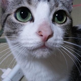 かわいい猫です。お願いいたします。