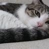 かわいい猫です。お願いいたします。 サムネイル2