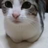 かわいい猫です。お願いいたします。 サムネイル3