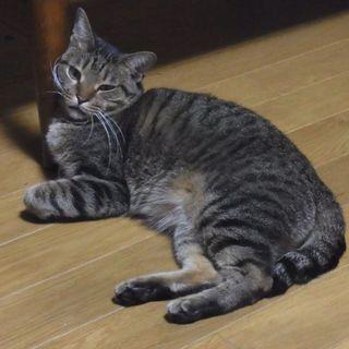非常に人懐っこい猫で、こんな子 めったにいません