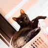 黒豹のような黒猫@多頭向き はやたくん サムネイル5