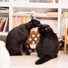 黒豹のような黒猫@多頭向き はやたくん サムネイル6