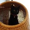 あまあま♡黒猫ちはるちゃん里親募集 サムネイル2