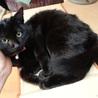 あまあま♡黒猫ちはるちゃん里親募集 サムネイル3