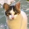 【3/18猫の未来とびら譲渡会】ナナ6ヵ月