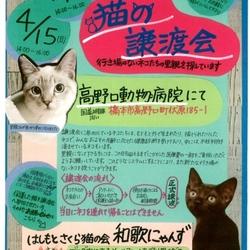 猫の譲渡会♡はしもとさくら猫の会 和歌にゃんず