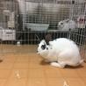 ミニウサギ♀あずきちゃん 1才のおてんば姫 サムネイル4