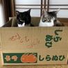 デコとポン 2匹 ¥280