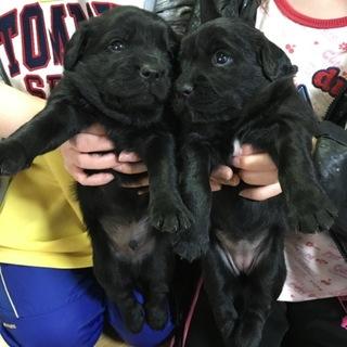 【急募仔犬7匹!】最後まで可愛がってくれる方。