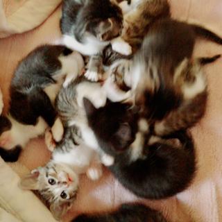 子猫の里親募集します!