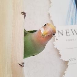 鳥の爪が黒いのですが病気でしょうか