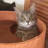 うすグレー 美猫!優しい男の子!