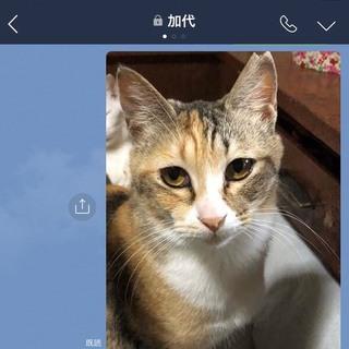 甘えん坊な猫、家族として飼って下さい。