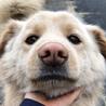 【緊急】迷い犬の里親募集中!
