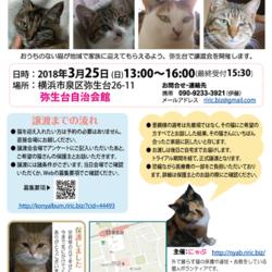 横浜市泉区でねこの譲渡会 第4回 3月25日(日)