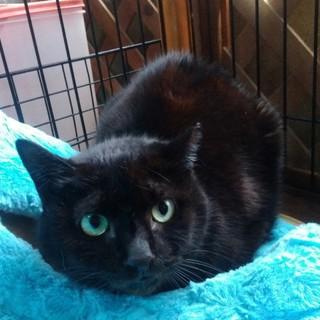 交通事故にて保護した黒猫ちゃんです。